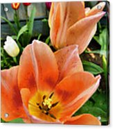 Lets All Dance For The Tulips Are Out Acrylic Print