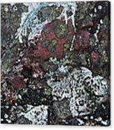 Lichen Abstract II Acrylic Print