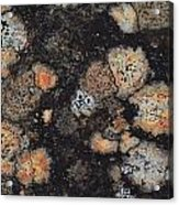 Lichen Abstract Acrylic Print