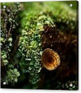 Lichen And Fungi 1 Acrylic Print