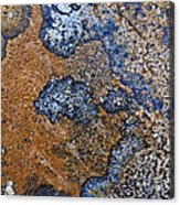 Lichen Pattern Series - 35 Acrylic Print