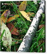 Lichen Recycling Acrylic Print