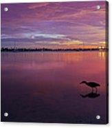 Life After Sunset Acrylic Print