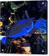 Life Among The Coral Acrylic Print