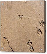 Footprints Mans Best Friend Acrylic Print
