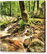 Life On The Rocks Acrylic Print