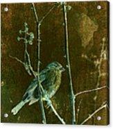 Lifesong Acrylic Print
