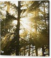 Light Beams Shining Through Trees And Fog Acrylic Print