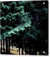 Light Forest Acrylic Print