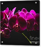 Light Painted Orchids Acrylic Print