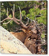 Like Father - Like Son Acrylic Print by Shane Bechler