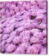 Lilac Frost Acrylic Print