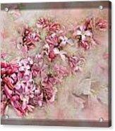 Lilacs And Wegia Acrylic Print