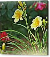Lilies And Roses Acrylic Print