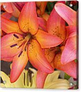 Lilies Background Acrylic Print