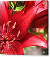 Lilies In Red Acrylic Print
