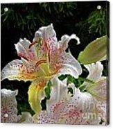 Lilies In The Rain Acrylic Print