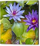 Lilies No. 2 Acrylic Print by Anne Klar