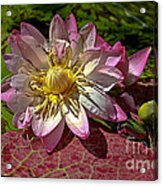 Lilies No.19 Acrylic Print by Anne Klar