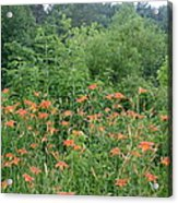 Lillies In The Valley Acrylic Print