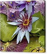 Lillies No. 9 Acrylic Print by Anne Klar