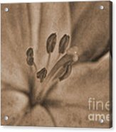 Lilly Old World Acrylic Print