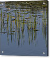 Lilly Pads Float On A River Acrylic Print by Stacy Gold