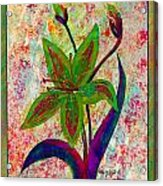 Lily Abstraction Acrylic Print