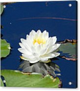 Lily Dreams Acrylic Print