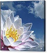Lily Flower Against Sky Acrylic Print