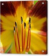 Lily Heart II Acrylic Print