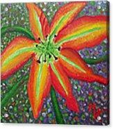 Lily In My Garden Acrylic Print