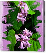 Lily Of The Valley - In The Pink #1 Acrylic Print