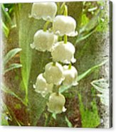 Lily Of The Valley - In White #2 Acrylic Print