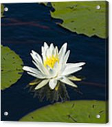 Lily Pad And Flower Acrylic Print