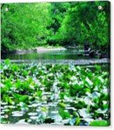 Lily Pads Along Unami Creek Acrylic Print