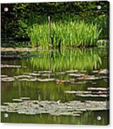 Lily Pads At Giverney Acrylic Print