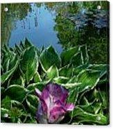 Lily Pond6 Acrylic Print