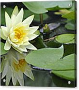 Lily Reflected Acrylic Print
