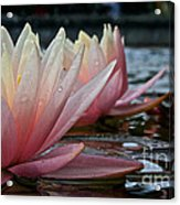 Lily Sisters Acrylic Print