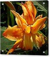 Lily Survival Acrylic Print