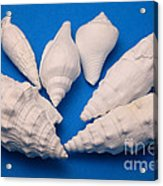 Lime Made From Seashells Acrylic Print by Ted Kinsman