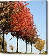 Line Of Autumn Trees Acrylic Print