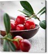 Lingonberries Acrylic Print