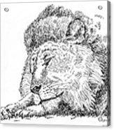 Lion-art-black-white Acrylic Print