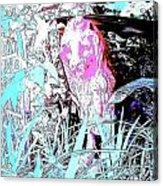 Lion Fence 6 Acrylic Print
