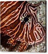 Lionfish Portrait Acrylic Print