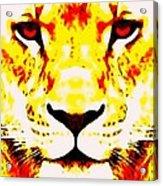 Lion In Winter Acrylic Print