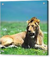 Lion King Acrylic Print