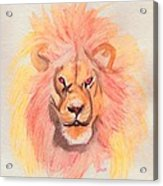 Lion Orange Acrylic Print